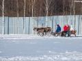 Поход к северным оленям
