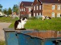 Соловецкий кот