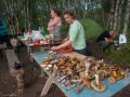 Море грибов Соловки