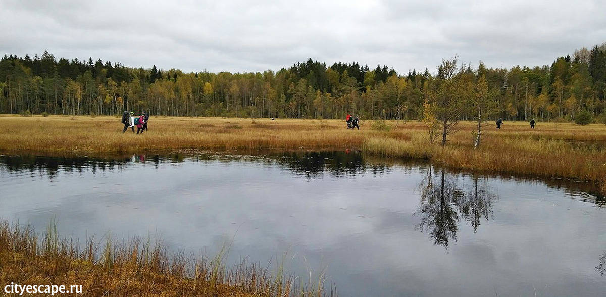 Поход за клюквой на болото